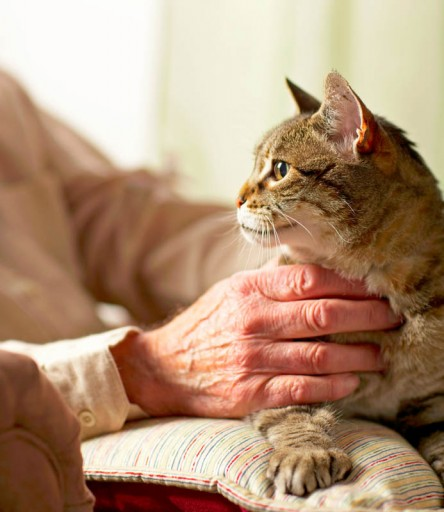 Senior man petting cat, a pet friendly community